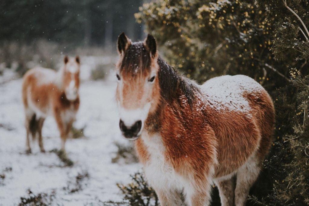 kůň v zimě